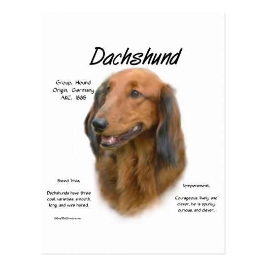 Dachshund (longhair) History Design Postcard