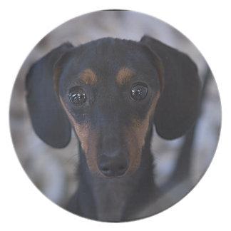 dachshund plate