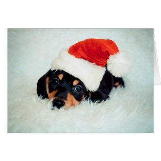 Dachshund Puppy Christmas Card