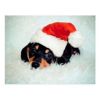 Dachshund Puppy Christmas Postcard