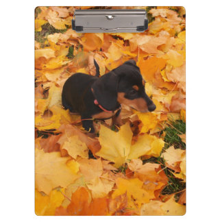 Dachshund puppy clipboard