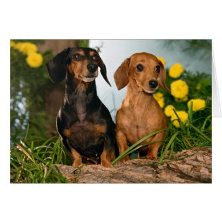 Dachshund Puppy Dog Blank Note Card