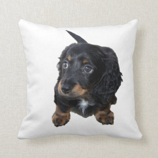 Dachshund puppy dog cute beautiful photo, cushion