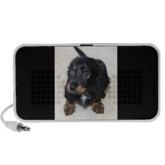 Dachshund puppy dog  cute beautiful photo, gift speaker system