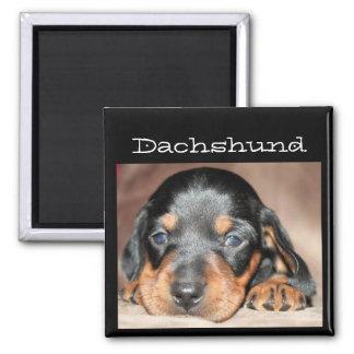 Dachshund Puppy Magnet
