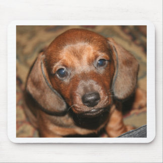 Dachshund Puppy One Mouse Mat