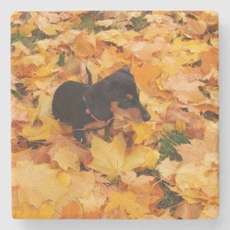 Dachshund puppy stone coaster