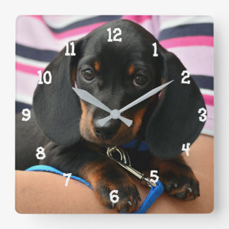 Dachshund Puppy Wall Clock