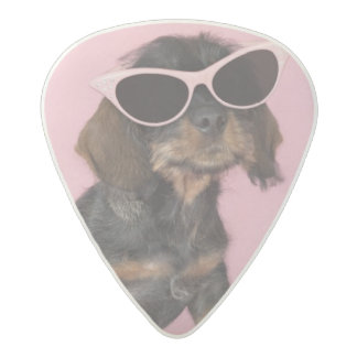 Dachshund Puppy Wearing Sunglasses Acetal Guitar Pick