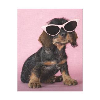 Dachshund puppy wearing sunglasses canvas print