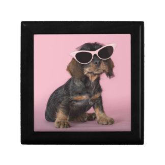 Dachshund puppy wearing sunglasses gift box