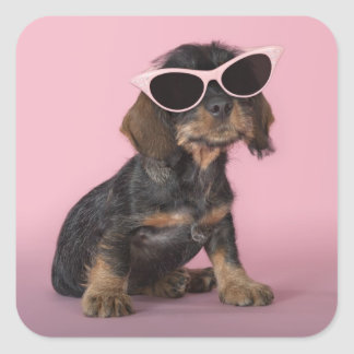 Dachshund Puppy Wearing Sunglasses Square Sticker