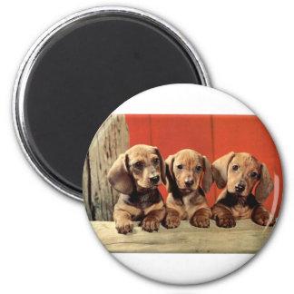 Dachshund Puppy's 6 Cm Round Magnet