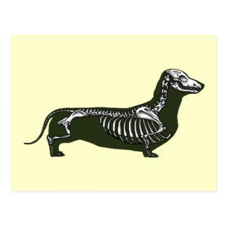dachshund skeleton post cards
