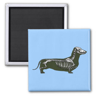 dachshund skeleton square magnet