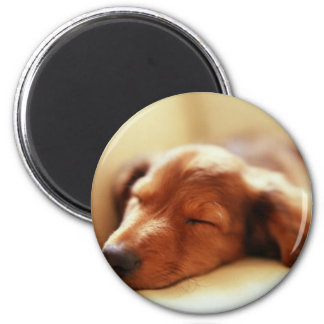 Dachshund sleeping 6 cm round magnet
