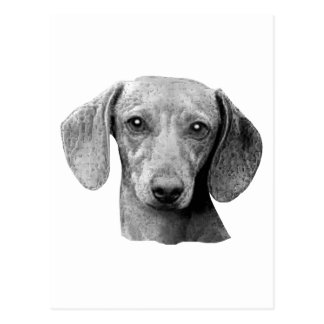 Dachshund - Stylized Image Postcard