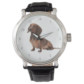 Dachshund Watch