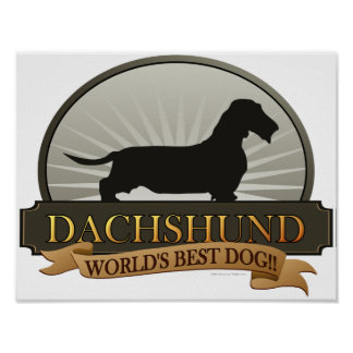 Dachshund [Wire-haired] Poster