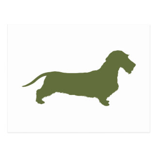 Dachshund Wirehaired Post Card