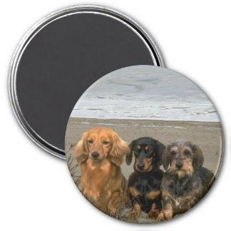 Dachshunds Magnet On The Beach