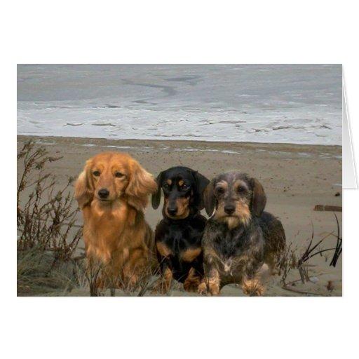 Dachshunds On The Beach Card