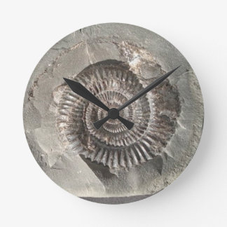 Dactylioceras ammonite in rock clock