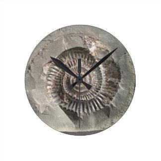Dactylioceras ammonite in rock round clock