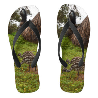 Daddy And Baby Emus Going For A Walk, Flip Flops