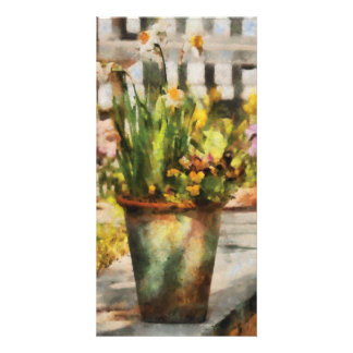 Daffodil  - A pot of daffodil's Picture Card