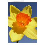 Daffodil Against Blue Sky Greeting Cards