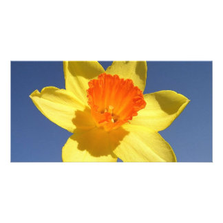 Daffodil Against Blue Sky Photo Greeting Card