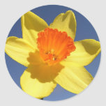 Daffodil Against Blue Sky Round Stickers