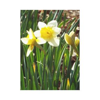 Daffodil always spring wall print