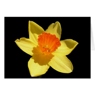 Daffodil Background Removed Greeting Card