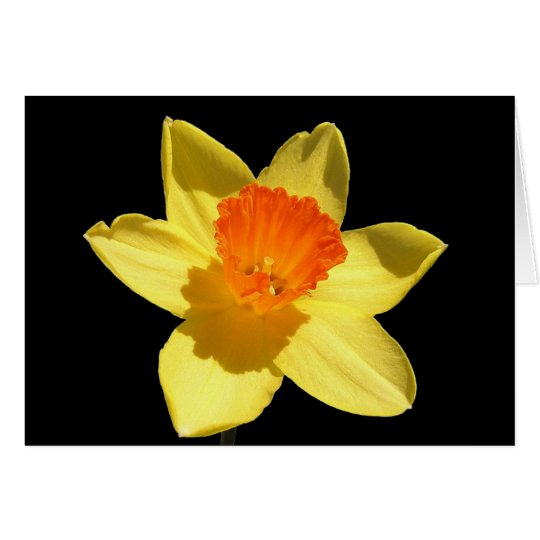 Daffodil (Background Removed) Card