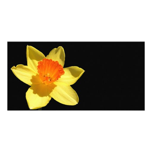 Daffodil (Background Removed) Personalised Photo Card