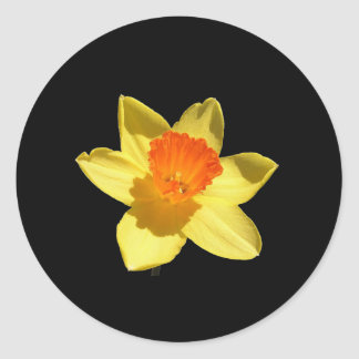 Daffodil Background Removed Sticker