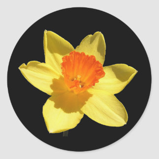 Daffodil (Background Removed) Sticker