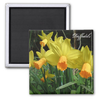 Daffodil Card Square Magnet