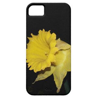 Daffodil iPhone 5 Cover