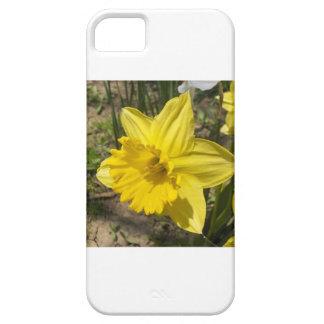 Daffodil iPhone 5 Case