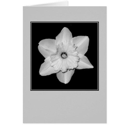 Daffodil Close-up (B&W) Blank Note Card