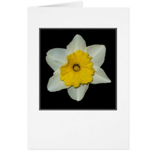 Daffodil Close-up Blank Greeting Card