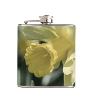 Daffodil Flower Photography Hip Flasks