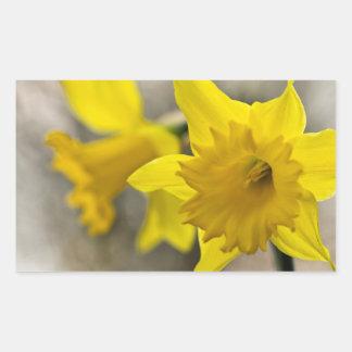 Daffodil flower rectangular sticker