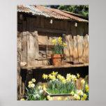 Daffodil Hill Barn Posters