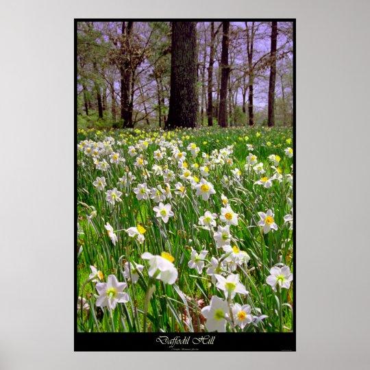 Daffodil Hill Poster