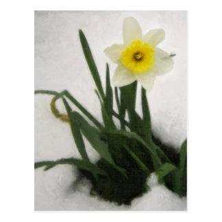 Daffodil in Snow Postcard