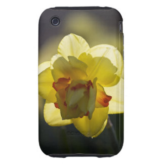 Daffodil iPhone 3G/3GS Case-Mate Tough iPhone 3 Tough Cases